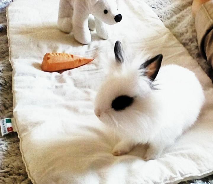 Причины гибели кроликов и что с этим делать