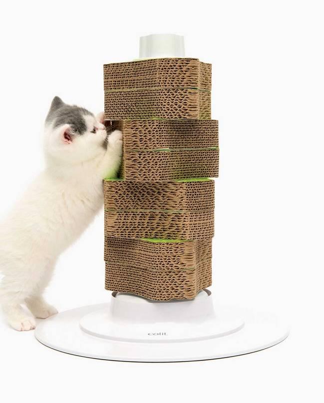 Как правильно приучить взрослого кота и котенка к когтеточке