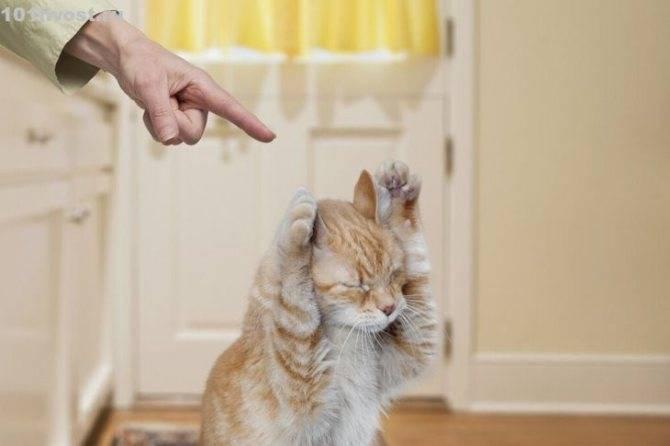 Как отучить котенка кусаться и царапаться раз и навсегда