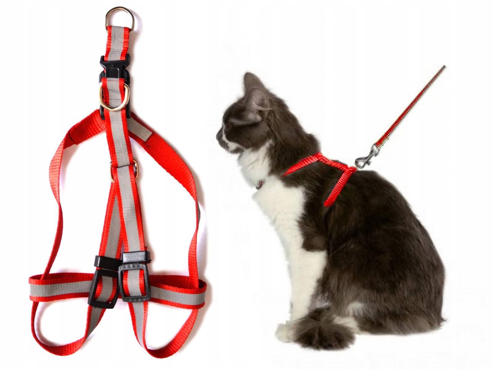 Нужны ли поводки кошкам для прогулки: какие бывают ошейники и как их применять