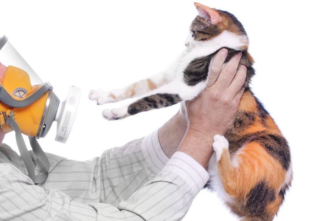 Как избавиться от аллергии на кошек и можно ли вылечить ее навсегда?