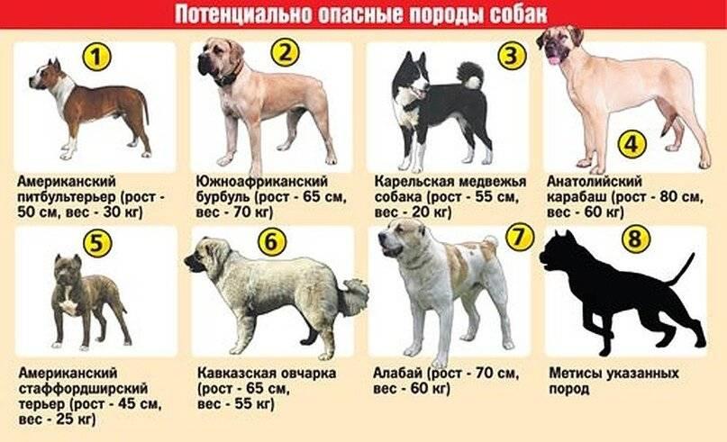 Самые опасные и жестокие собаки в мире: список пород с описаниями и фотографиями