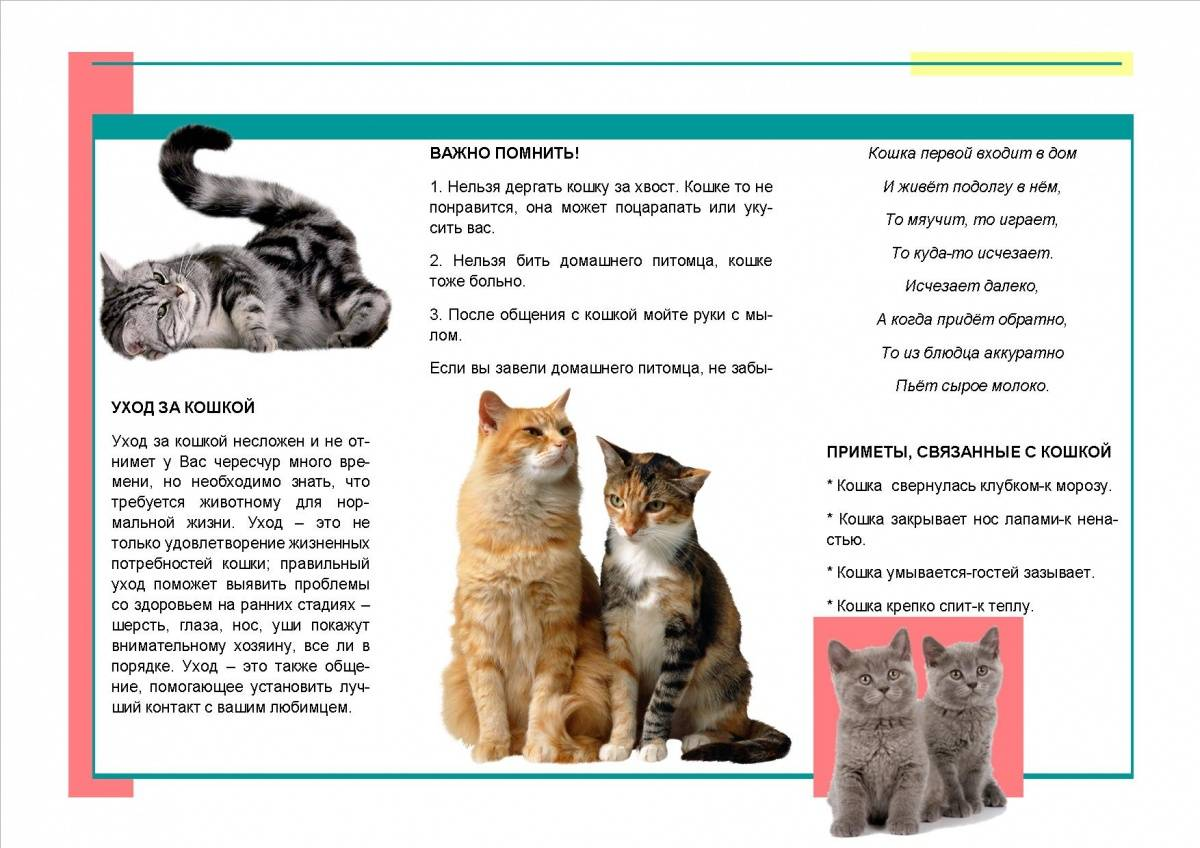 Как надолго можно оставить кошку одну в квартире: сроки и 4 альтернативных варианта