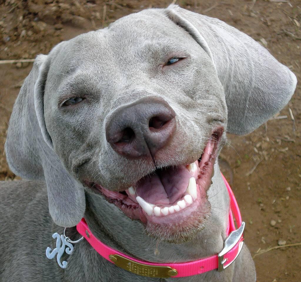 Умеют ли собаки и кошки смеяться