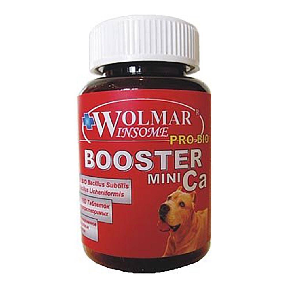 Витамины для суставов для собак крупных и мелких пород: какие нужны, обзор витаминных комплексов