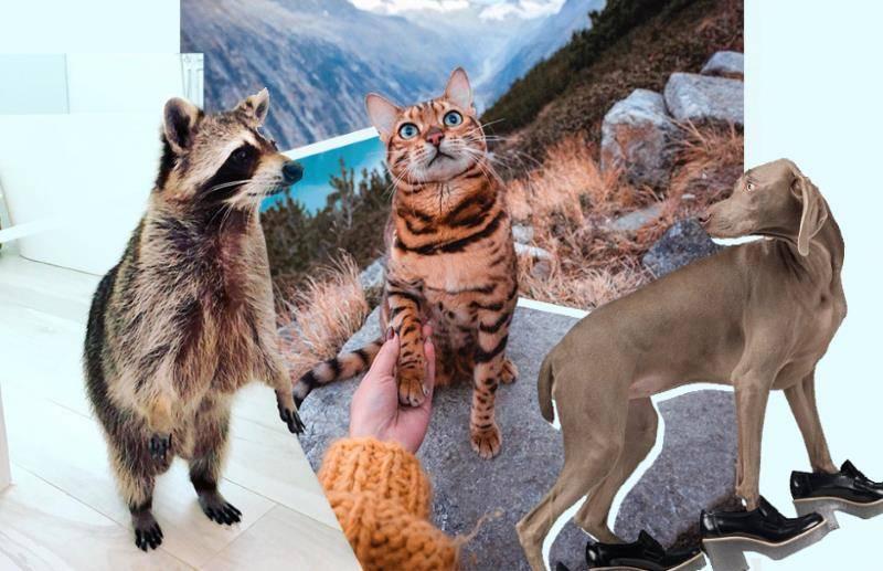 5 вещей, которых больше всего боятся домашние кошки | gafki.ru | яндекс дзен