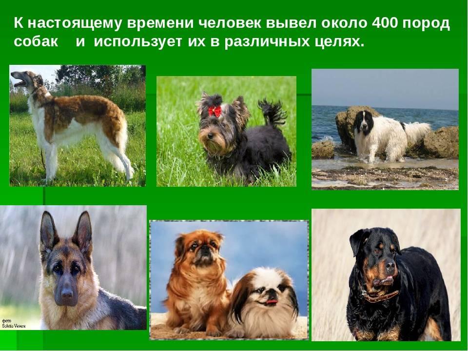 Красота и сила: русские породы собак