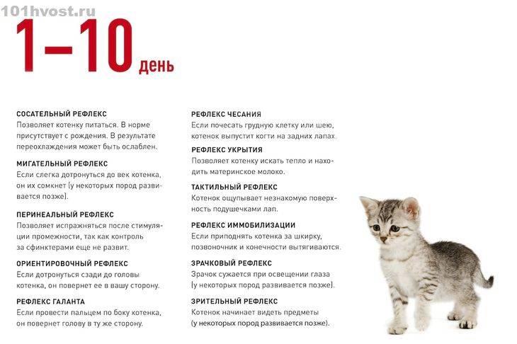 Правила и рекомендации по уходу за новорожденными котятами от ветеринаров