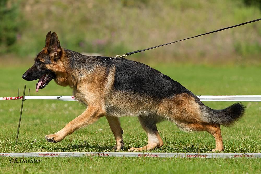 Окрасы собак (36 фото): черно-белые и рыжие, пятнистые коричневые и серые собаки различных пород, цвета мерль и палевый, трехцветные и чепрачные щенки