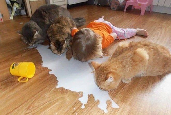 4 действия, которые нельзя делать в присутствии кошки