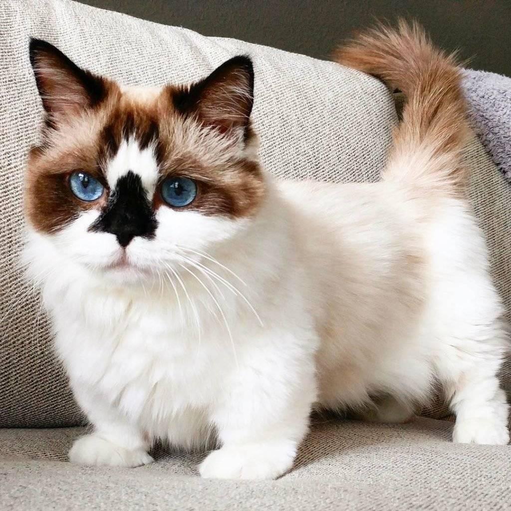 Какие породы кошек самые красивые в мире
