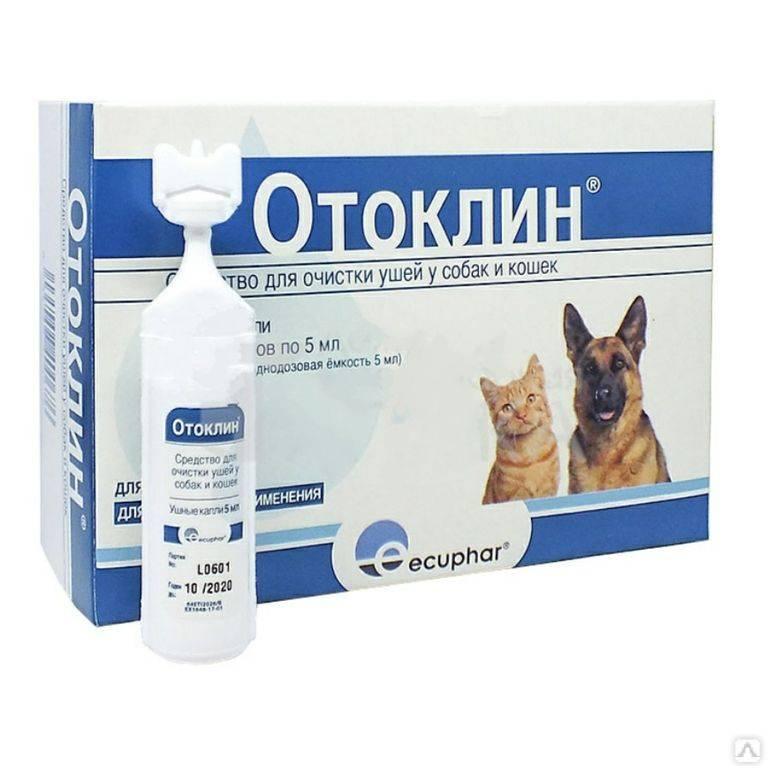 Как поставить уши собаке: описание процедуры в домашних условиях