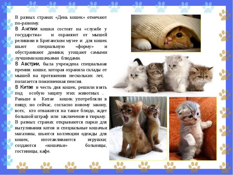 Всемирный день кошек: 8 августа или 1 марта
