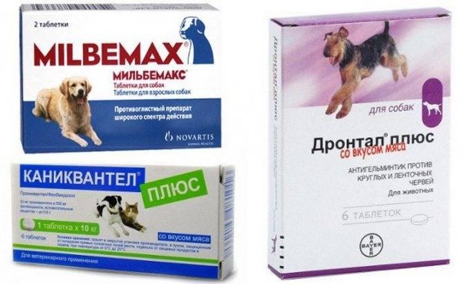 Как дать кошке таблетку от глистов – разные способы, советы и рекомендации