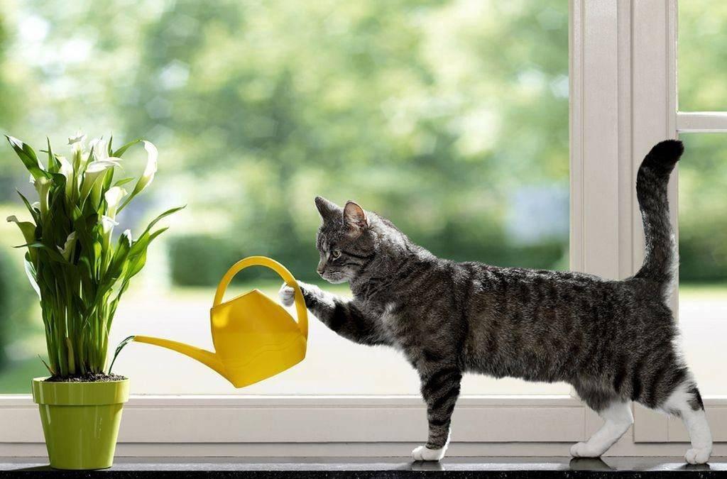Чем отравить кошек в подвале без последствия - мечети мира