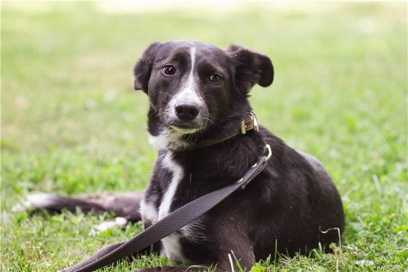 Самые добрые собаки. топ-40.   dogkind.ru