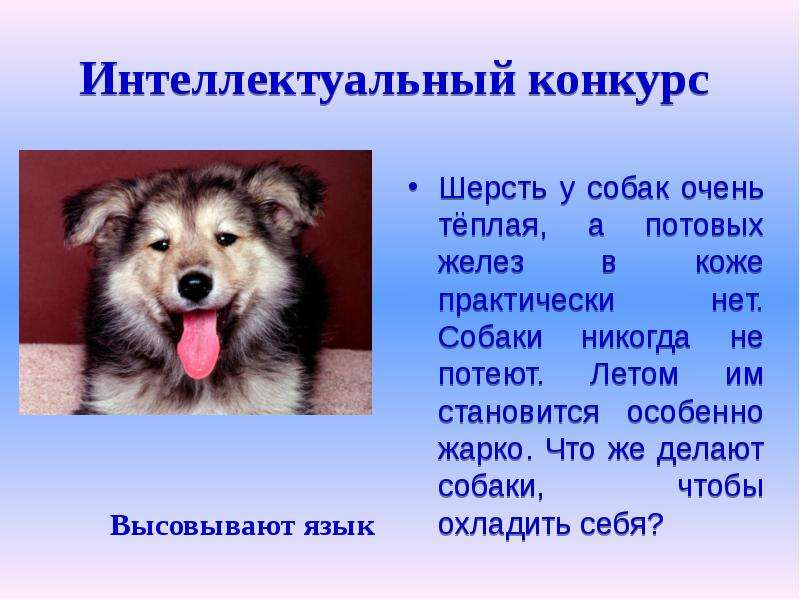 Терморегуляция собак