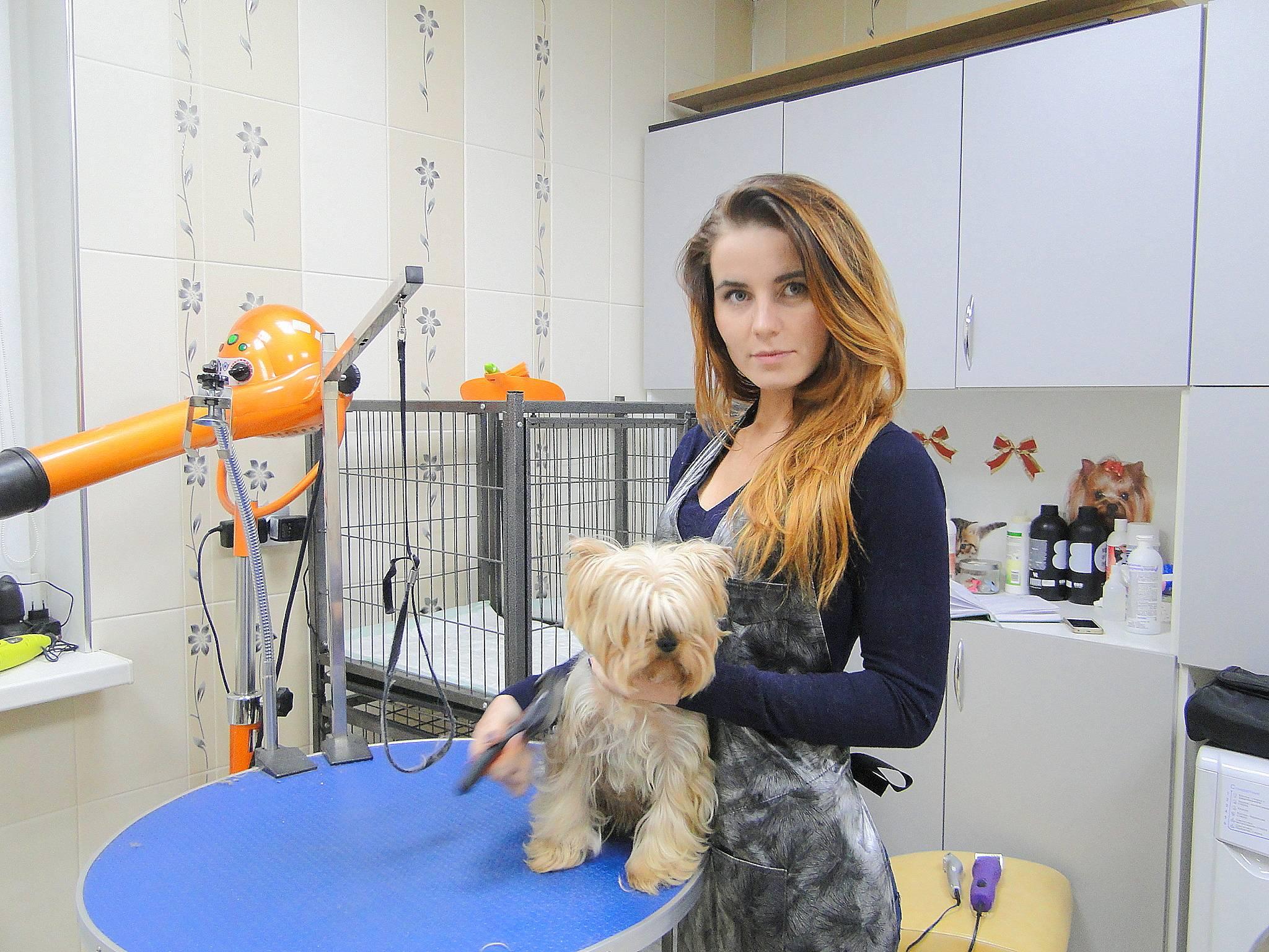 Парикмахер собак на дому как называется. профессия: как называется парикмахер для собак и кошек