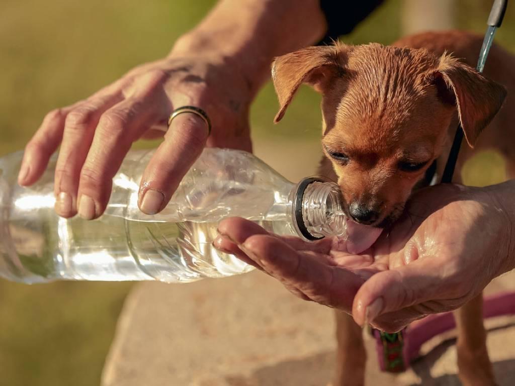 Собака не пьет воду — причины и что делать?
