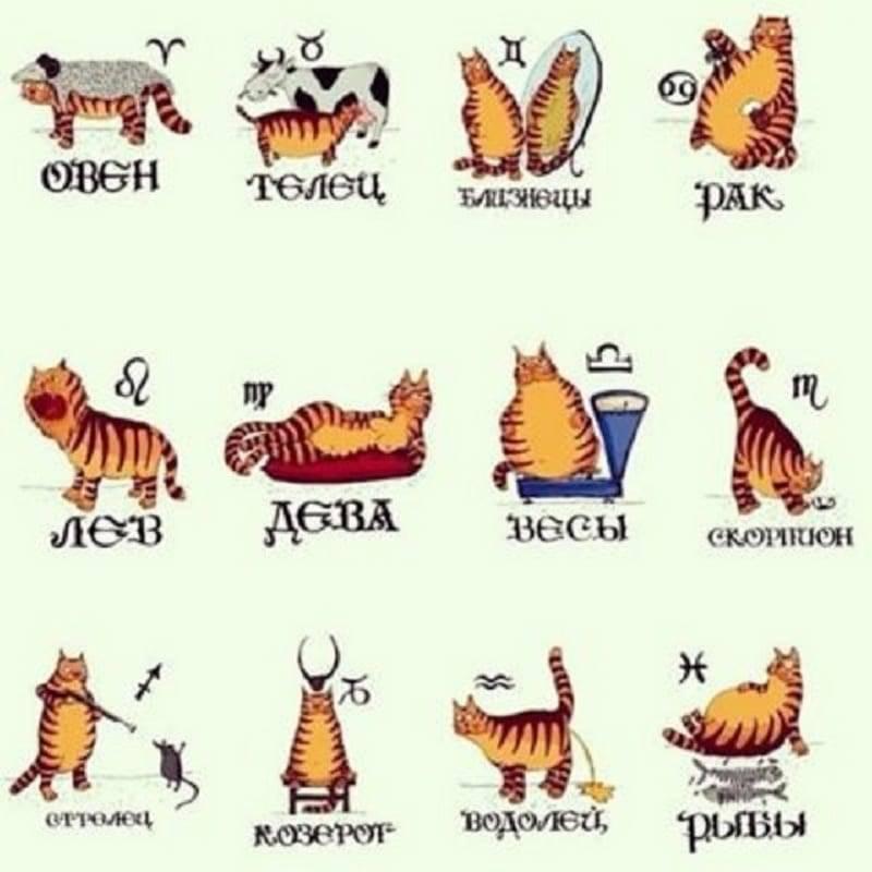 Домашние животные для каждого знака зодиака