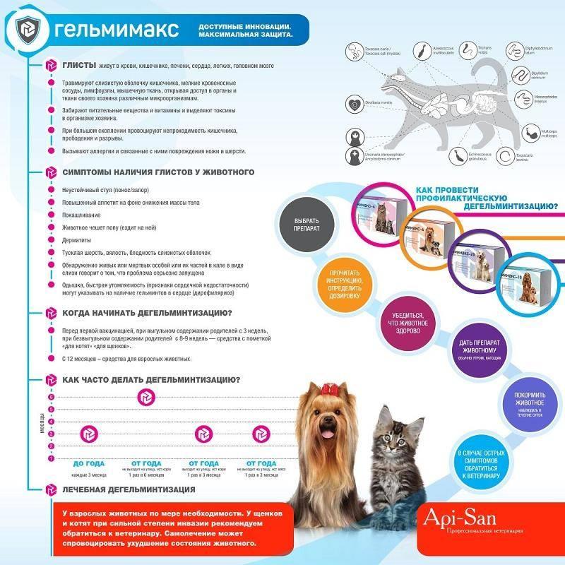 Признаки и лечение глистов у собаки