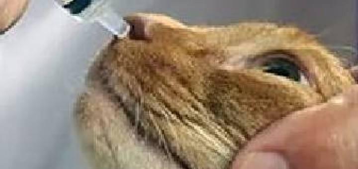 Насморк у кошки: ? причины, симптомы, эффективное лечение
