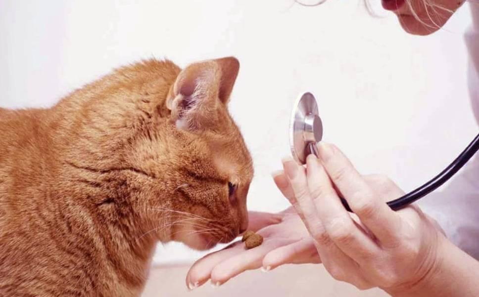 Инсульт у кошек: шанс на выздоровление есть всегда
