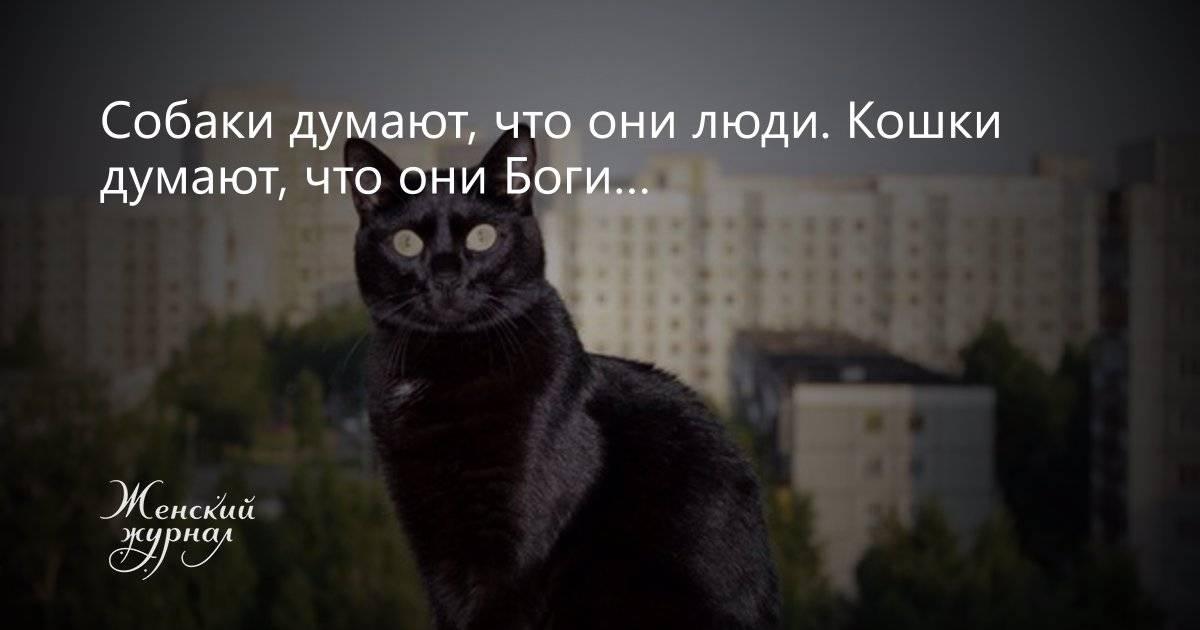 О чём думают кошки и что нам об этом известно – мнение натуралиста джона брэдшоу
