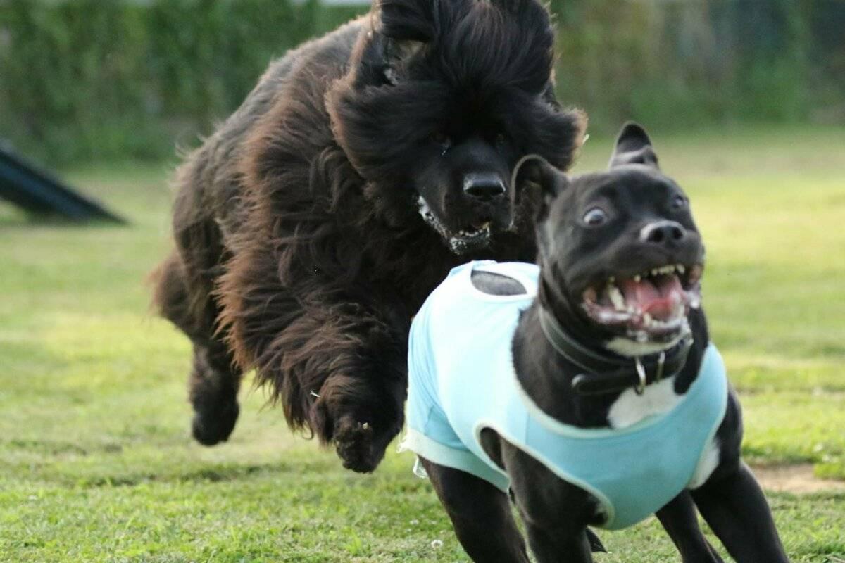 Самые смешные собаки. топ 10 пород