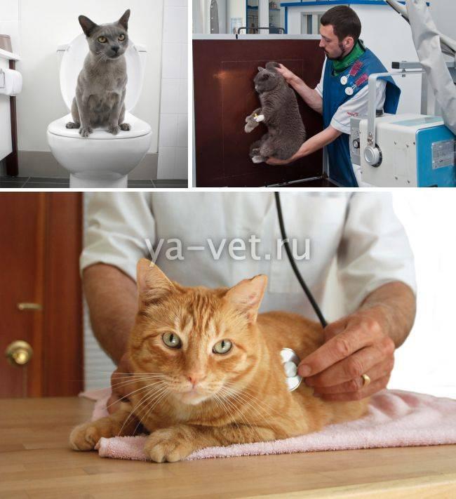Понос у кошки, причины, лечение в домашних условиях, видео советы