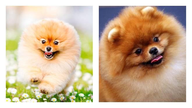 Клички для собак-девочек маленьких пород