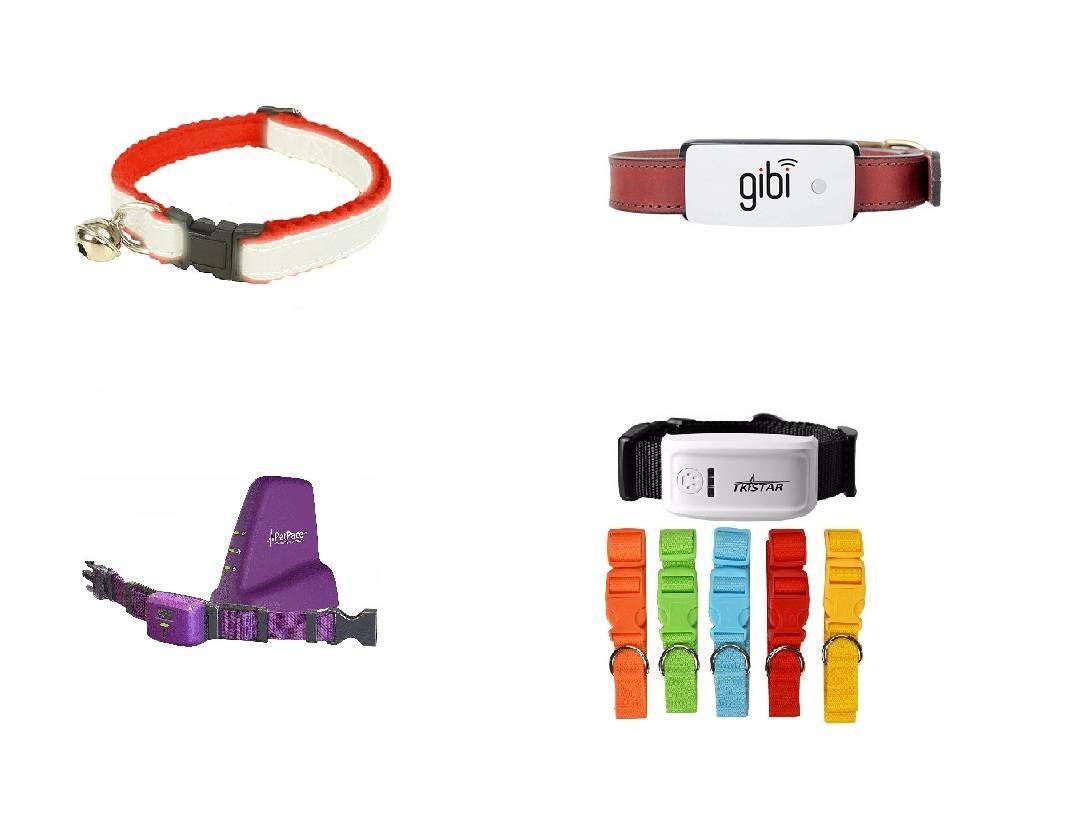 Gps датчик для кота - вэб-шпаргалка для интернет предпринимателей!