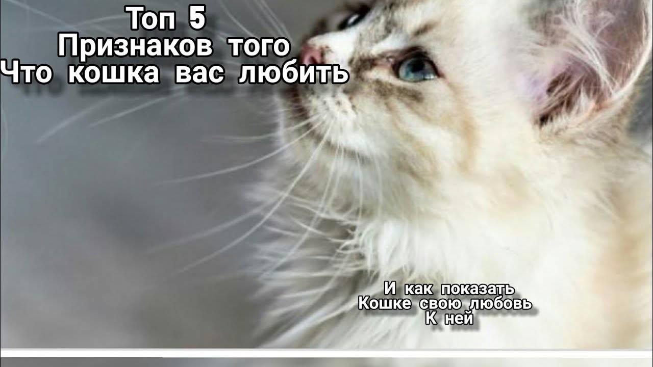 Как понять, что кошка вас любит ~ коточек