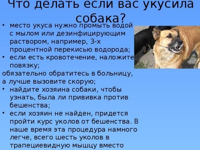 Что делать при укусе собаки