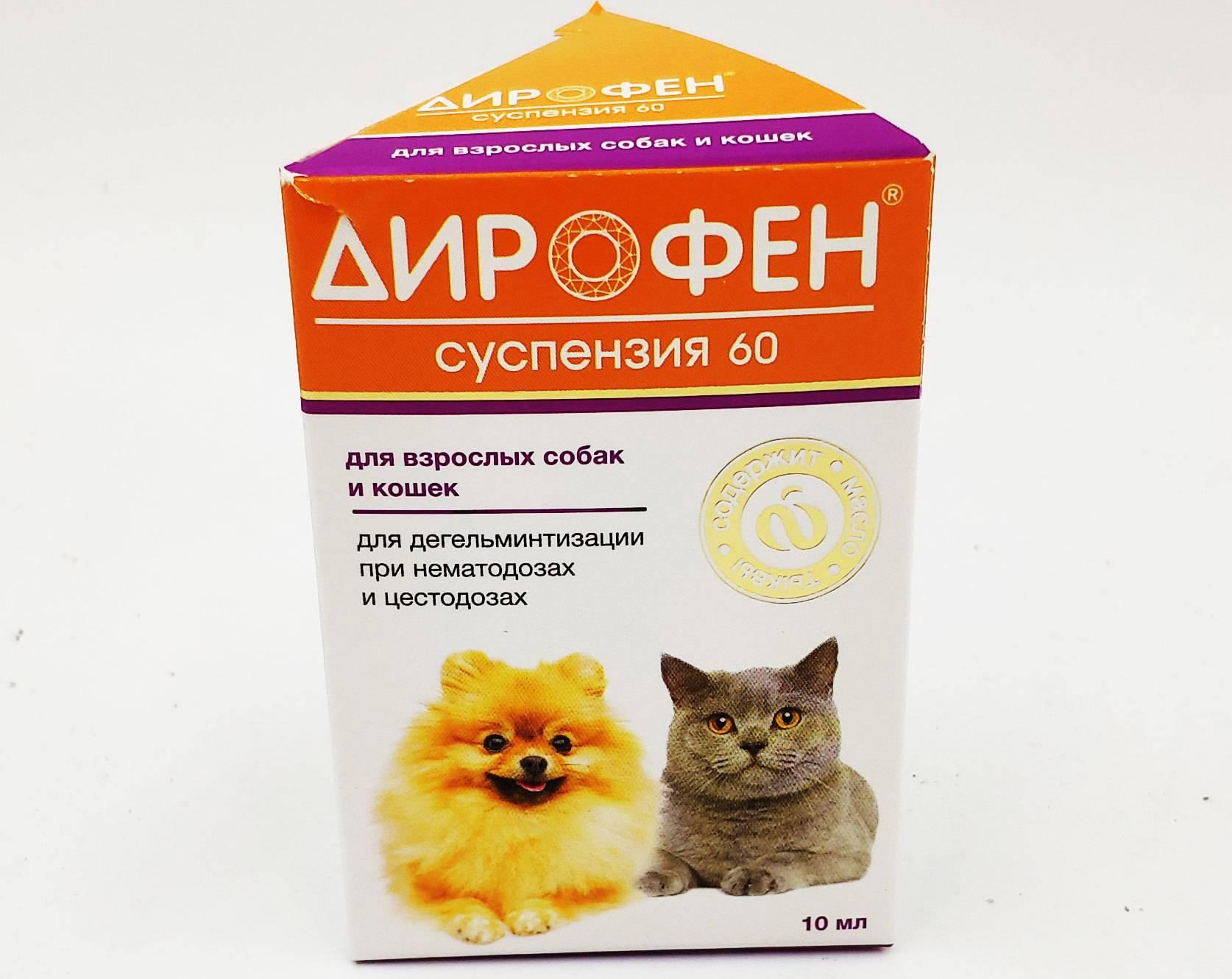 Дирофен для кошек: инструкция по применению, дозировка, как давать взрослым животным и котятам