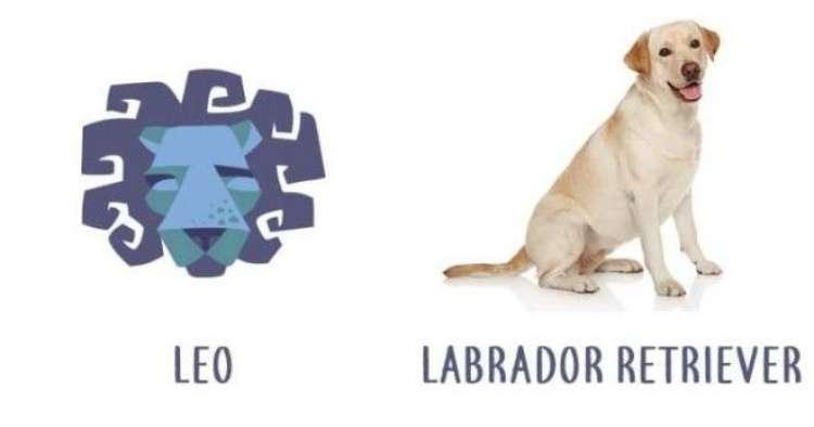 Подходящая порода собак по знаку зодиака