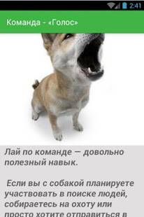 Несколько способов, как обучить собаку подавать голос