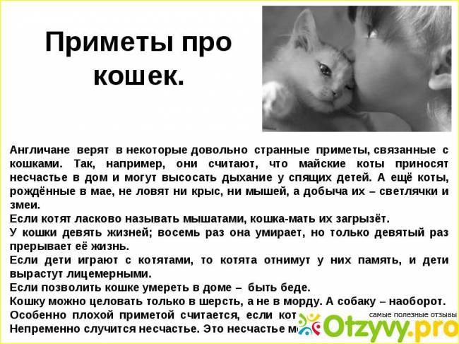 Можно ли целовать кошек домашних ? здоровье и медицина ? другое