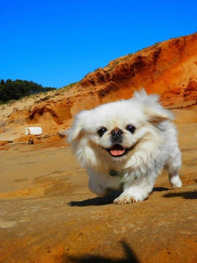 Недорогие породы собак и самые разные существующие виды с их описанием