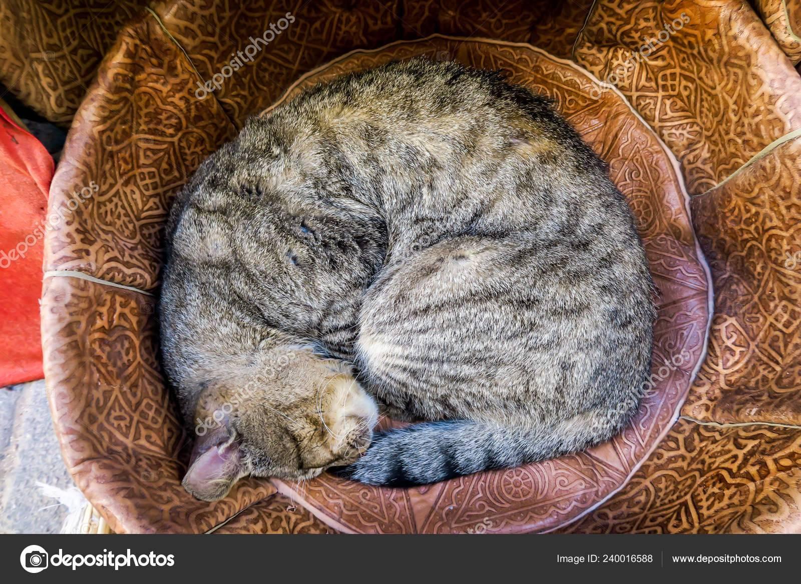 Если кошка спит на кровати хозяина, что гласит примета, если она в ногах и если над головой