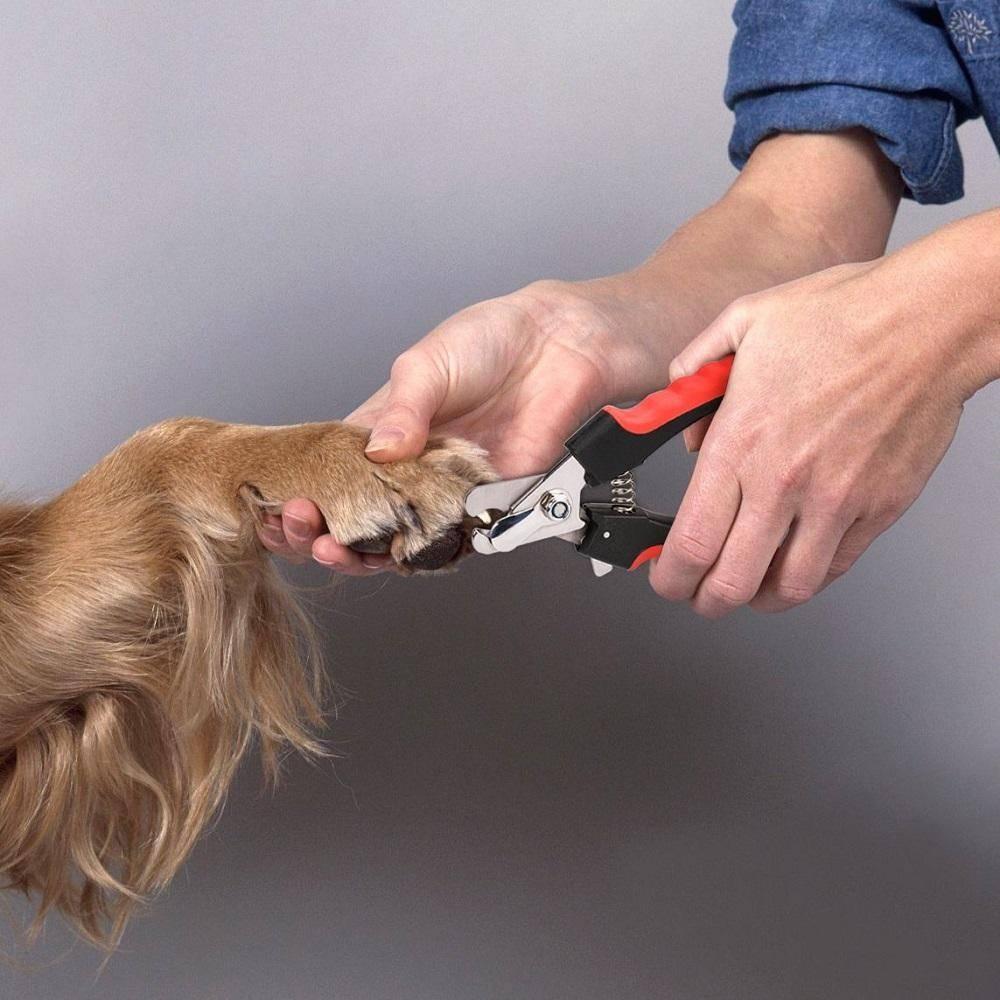 Собака не дает стричь: как стригут собаку в домашних условиях, если она не дается