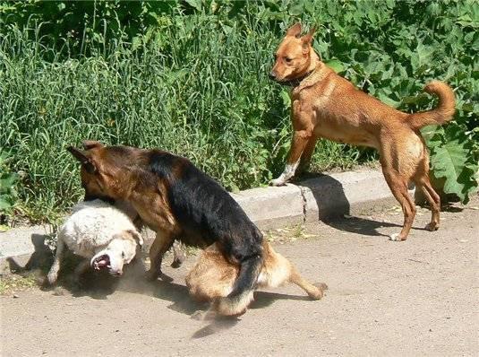 Почему собака воет - во дворе, по ночам, на луну и по другим причинам