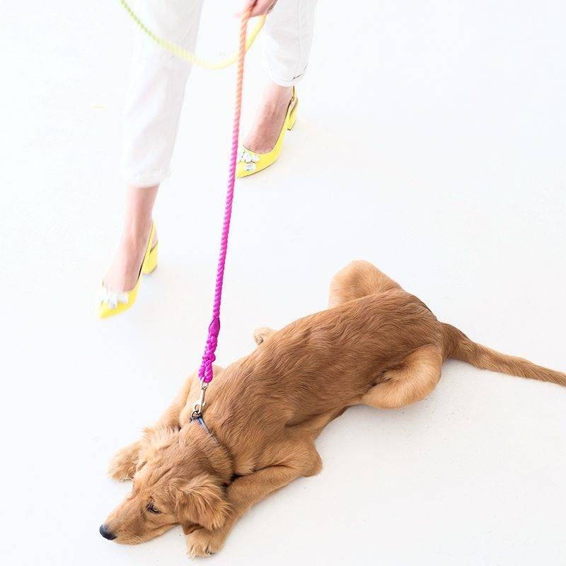 Как приучить щенка к поводку и ошейнику как приучить щенка к поводку и ошейнику