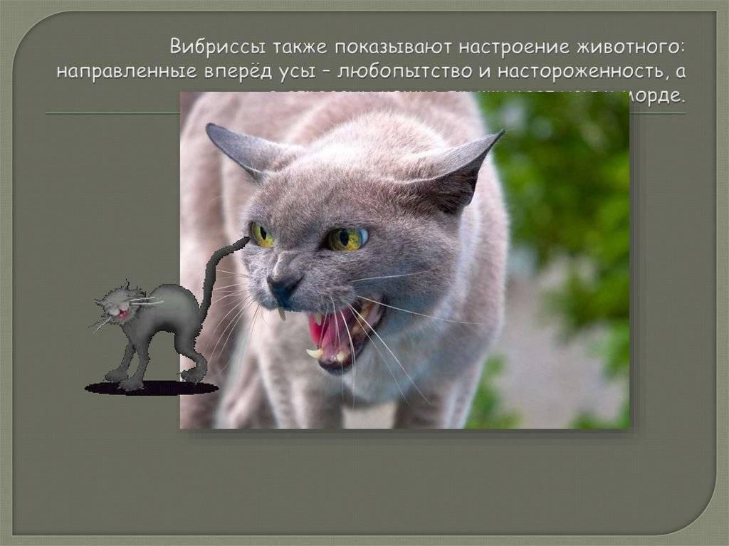 Почему кошки и коты мурлыкают, когда их гладишь и что это значит