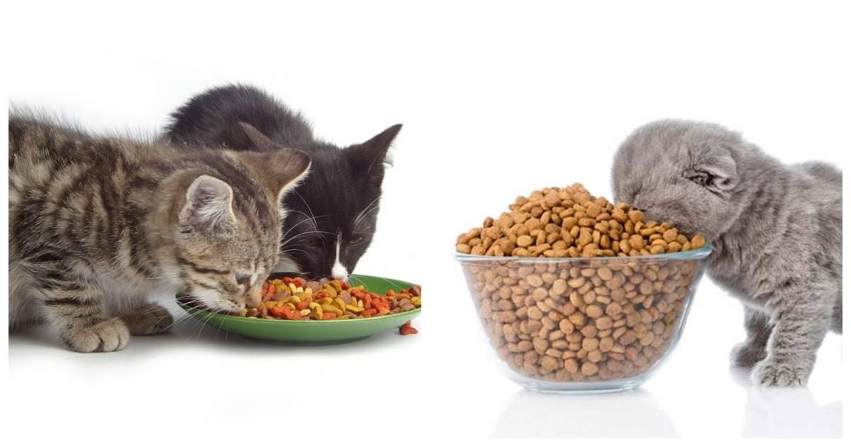 Какую рыбу можно давать кошкам и котам?