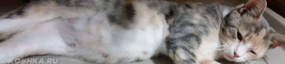 Беременность у кошки – признаки, длительность, принятие родов