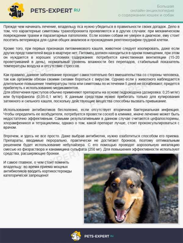 Кашель у собаки – причины, диагностика, лечение 2020