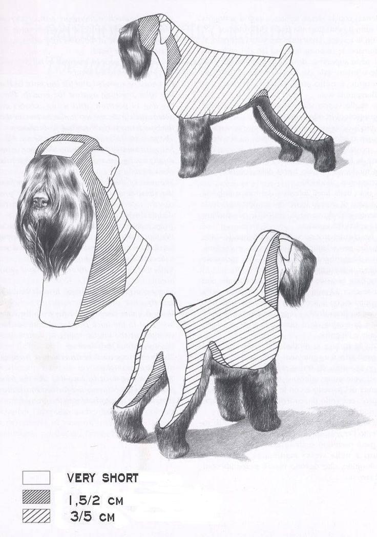 Как подстричь бороду цвергшнауцеру