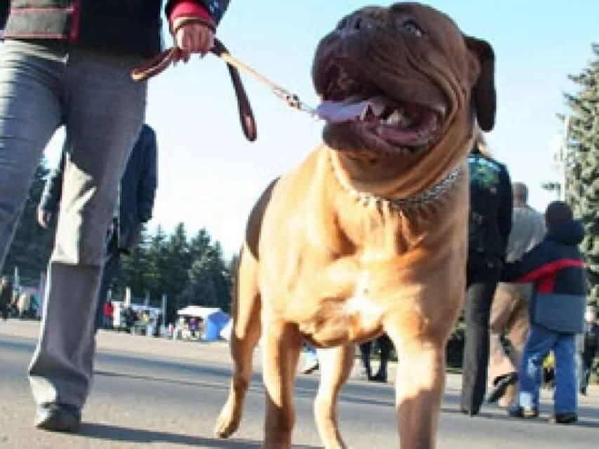 Штрафы для владельцев собак: за выгул в неположенном месте, без намордника и поводка и другие