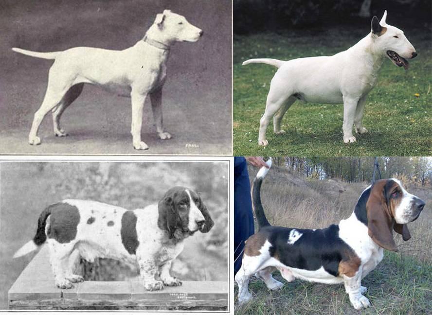 Глава 3. естественные породы. собаки. новый взгляд на происхождение, поведение и эволюцию собак